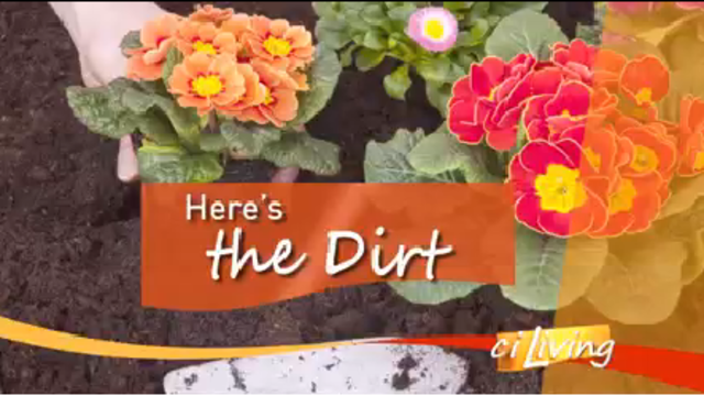 Here's the Dirt: Tomatoes